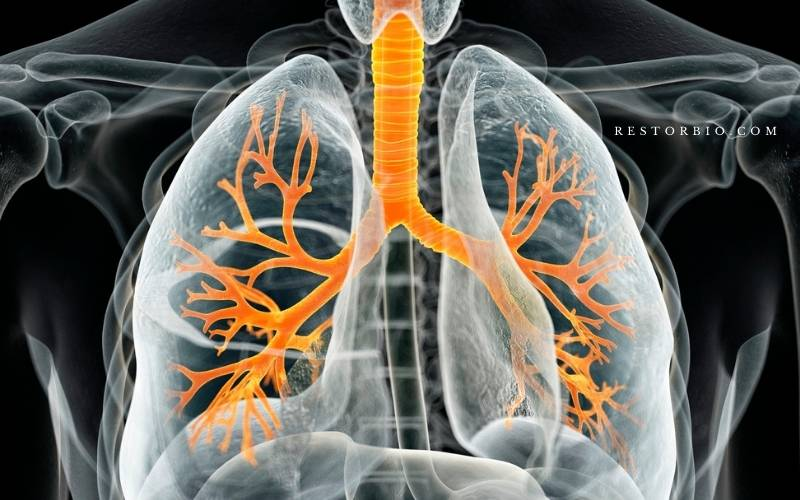 Age group related factors that affect the respiratory system (1)