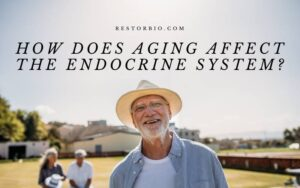 How Does Aging Affect The Endocrine System? Top Full Guide 2021