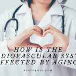 How Is The Cardiovascular System Affected By Aging (1)